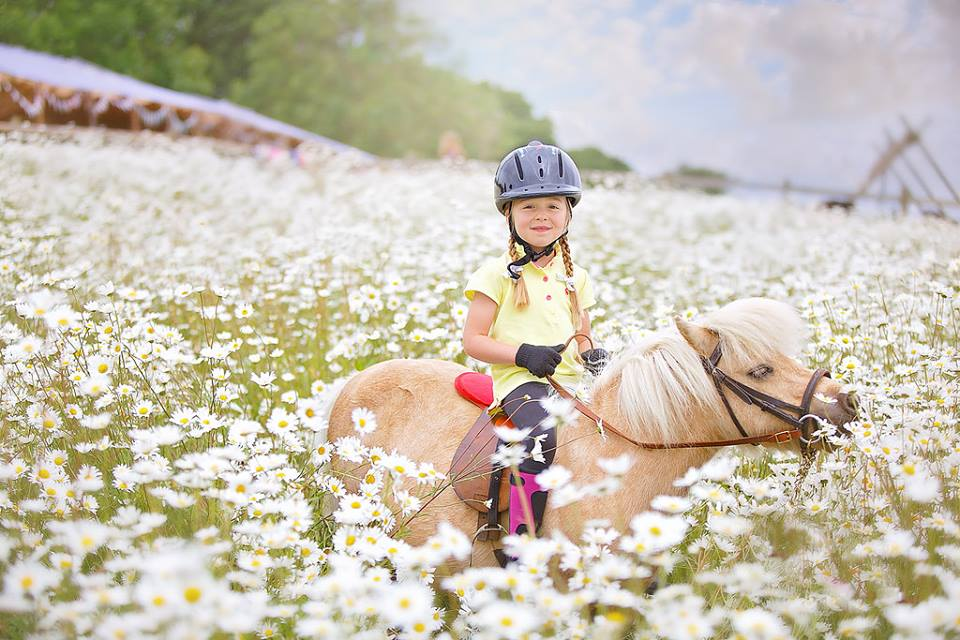 Riding Honeybee in the Moon Daisies at Shetland Pony Club