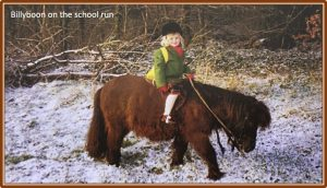 Billyboon - Shetland Pony on the School Run