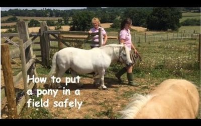 How to put a pony in a field safely
