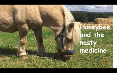 Honeybee and the nasty medicine