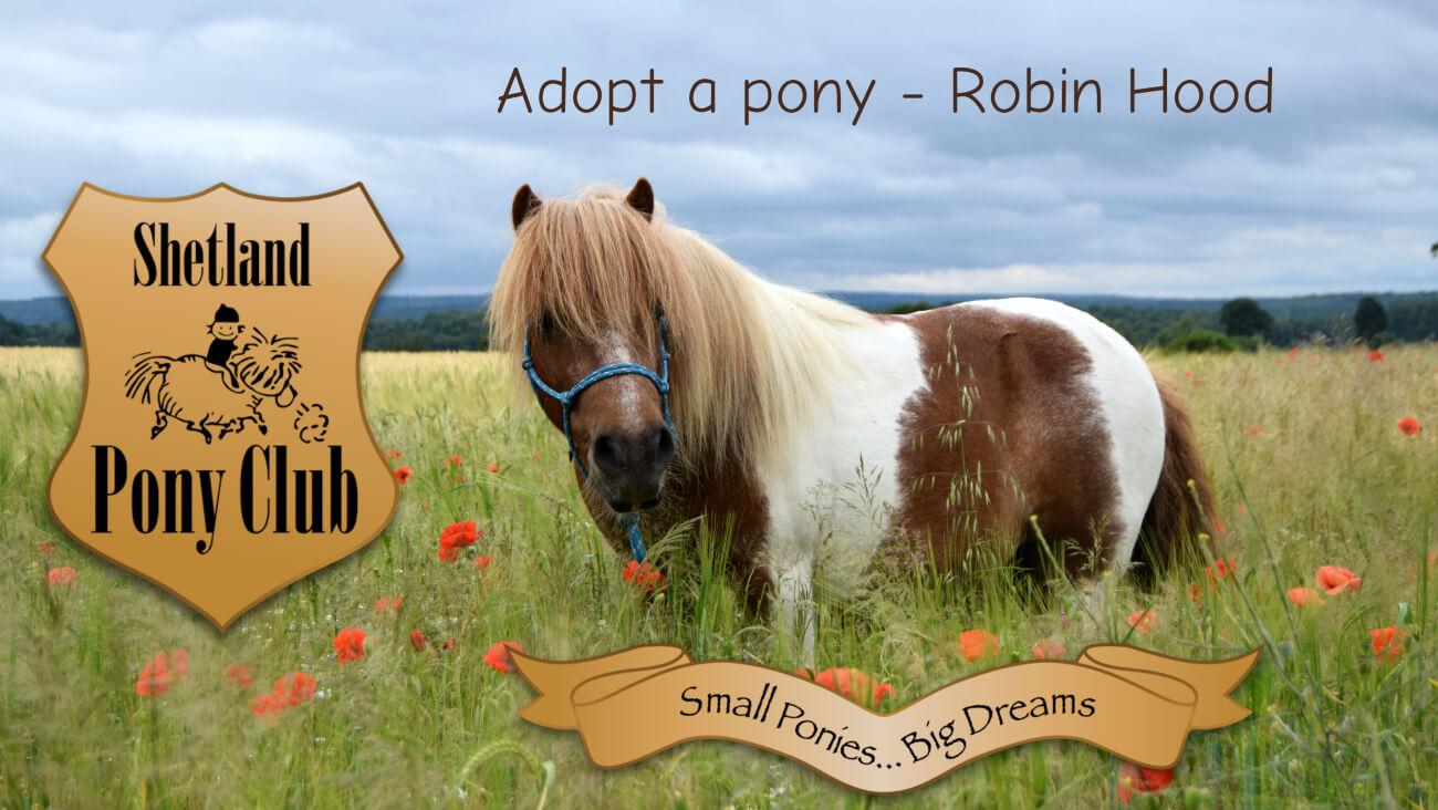 Shetland Pony Club Adopt a Pony