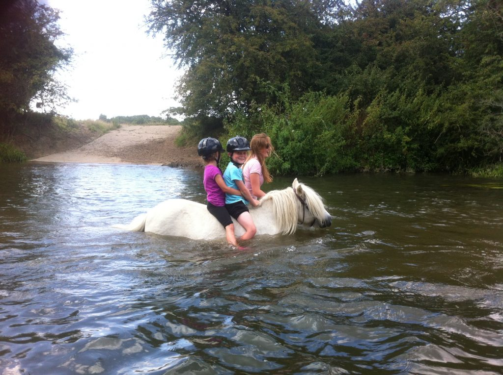 River Swimming on our summer pony camps at Shetland Pony Club