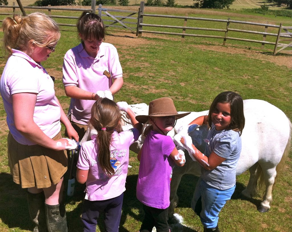 Washing ponies on our summer pony camps at Shetland Pony Club
