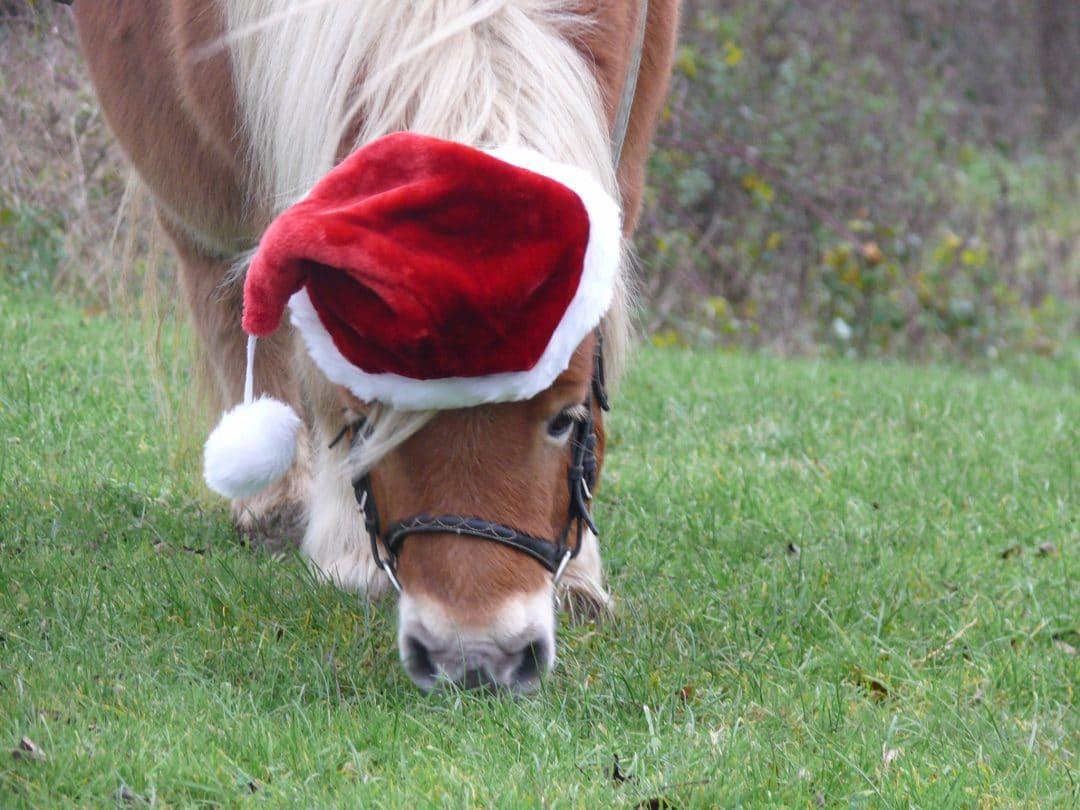Christmas Creme Brulee at Shetland Pony Club