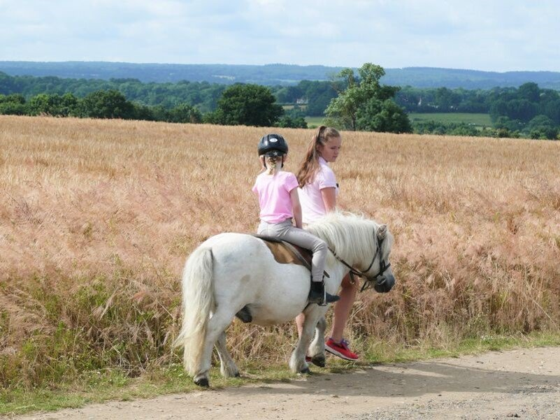 Cornfield riding at Shetland Pony Club