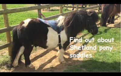 Find out about Shetland pony saddles