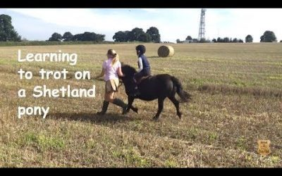 Learning to trot on a Shetland pony