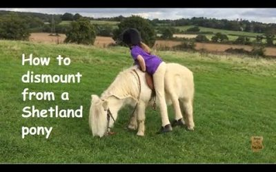 How to dismount from a Shetland pony
