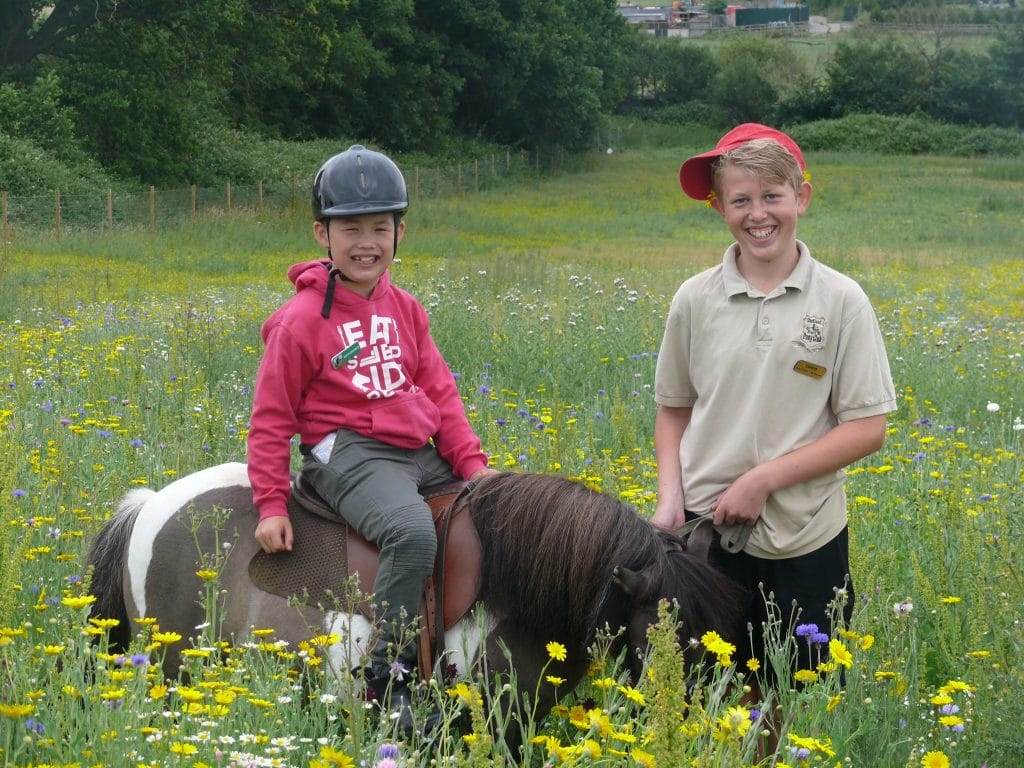 Pony Fun in the wildflower meadows at Shetland Pony Club