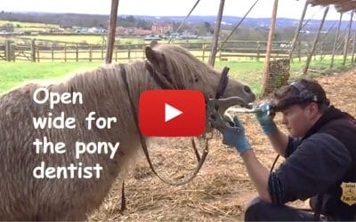 Open wide for the pony dentist