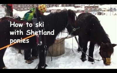 How to ski with Shetland ponies
