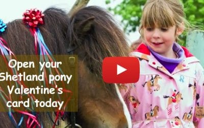 Open your Shetland pony Valentine's card today!