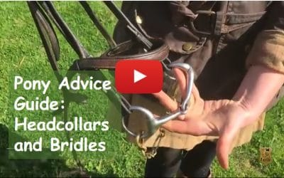Pony Advice Guide: headcollars and bridles