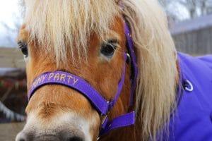 Pony birthday parties – amazing party fun for kids at Shetland Pony Club