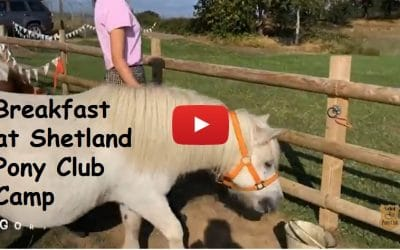 Breakfast at Shetland Pony Club Camp