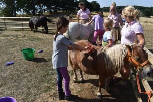 Busy washing the ponies at Shetland Pony Club Camp