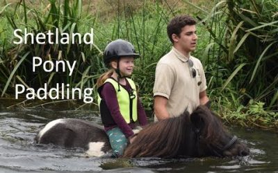 Shetland Pony paddling : TV Episode 192
