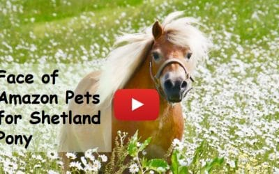 Face of Amazon Pets for Shetland Pony