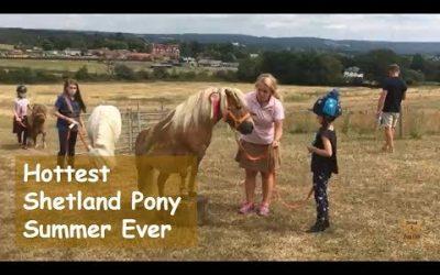 Hottest Shetland Pony Summer Ever
