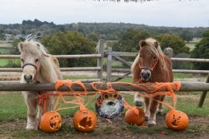 Honeybee and Creme Brulee enjoy Halloween pumpkin rides