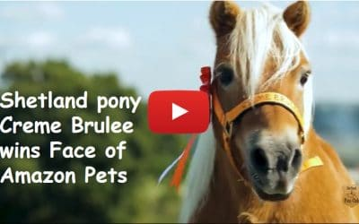 Shetland pony Creme Brulee wins Face of Amazon Pets