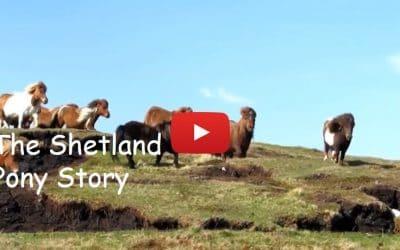 The Shetland pony story