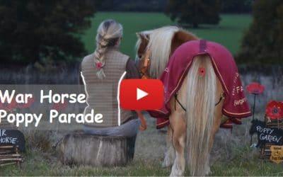 Shetland Pony Club's War Horse Poppy Parade