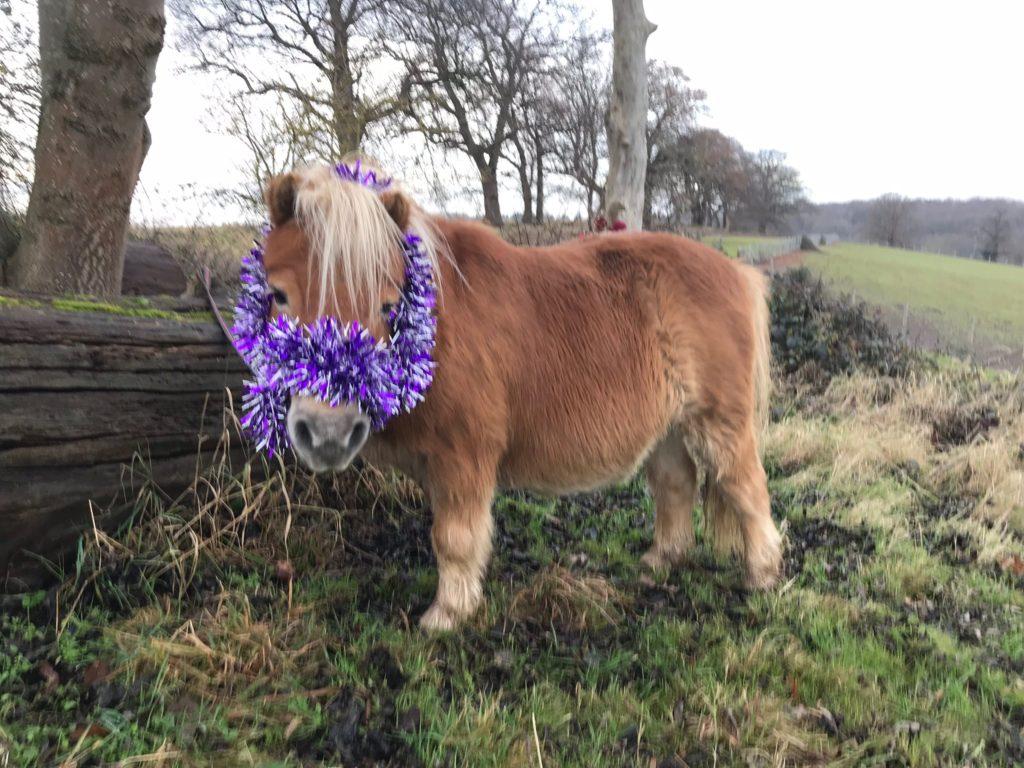 Sparkly Shetland Pony Creme Brulee