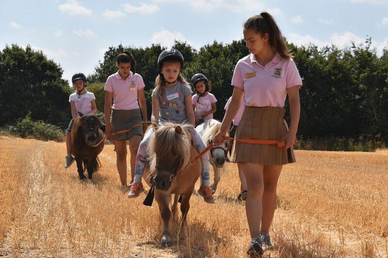 Cornfields at Shetland Pony Club