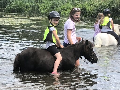 Muffin in the river at Shetland Pony Club