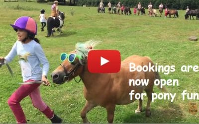 Bookings are now open for Shetland Pony Club 2019