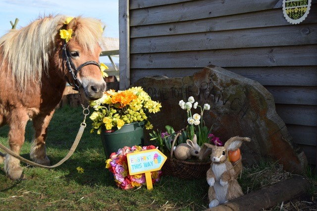 Easter Egg Hunt at Shetland Pony Club