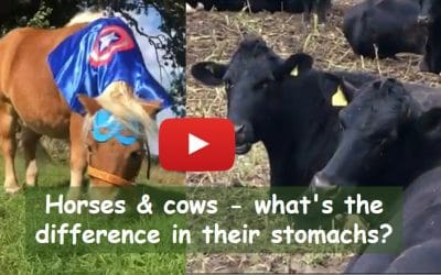 Horses & cows – what's the difference in their stomachs?