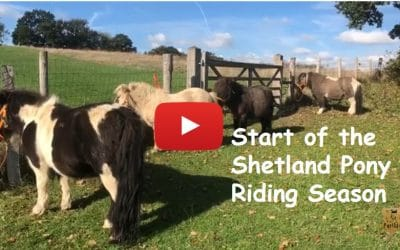 Start of the Shetland Pony Riding Season