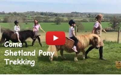 Come Shetland Pony Trekking