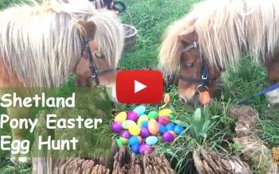 Shetland Pony Easter Egg Hunt
