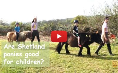 Are Shetland ponies good for children?