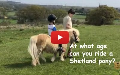 At what age can you ride a Shetland pony?