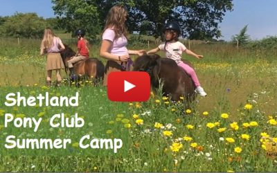 Priority notice for Shetland Pony Club Summer Camp