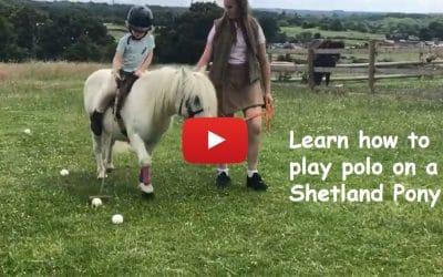 Learn how to play polo on a Shetland pony