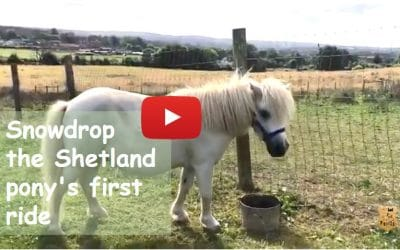 Snowdrop the Shetland pony's first ride