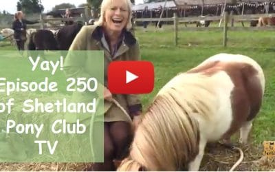 Yay! Episode 250 of Shetland Pony Club TV