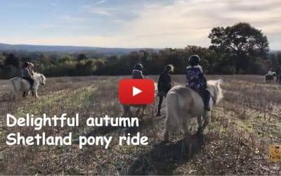 Delightful autumn Shetland pony ride