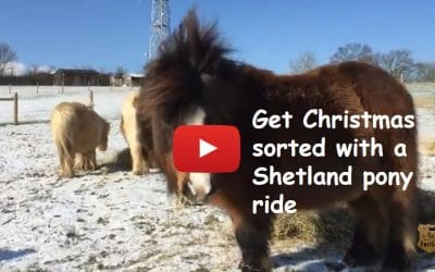 Get Christmas sorted with a Shetland pony ride