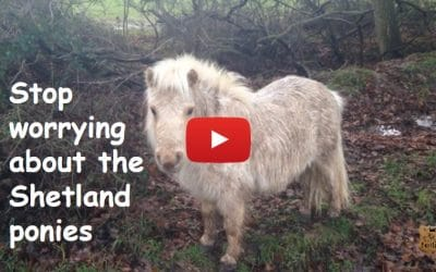 Stop worrying about the Shetland ponies