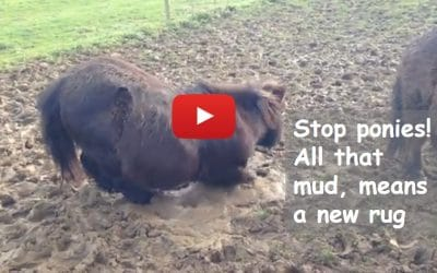 Stop ponies! All that mud, means a new rug