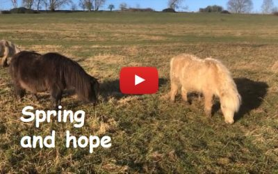 Shetland Pony Club closure from Wed 18 March 2020