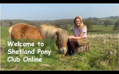 New Shetland Pony Club Online Website