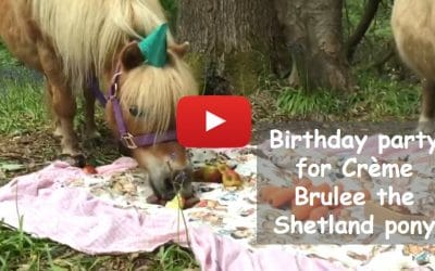 Birthday party for Creme Brulee the Shetland pony