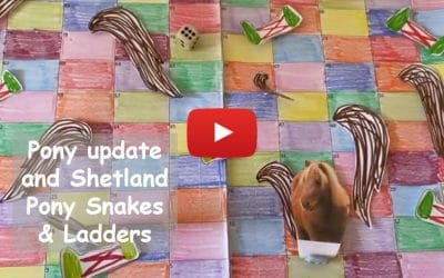 Pony update and Shetland Pony Snakes & Ladders